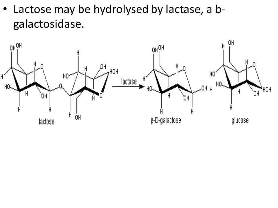 Lactose may be hydrolysed by lactase, a b-galactosidase.