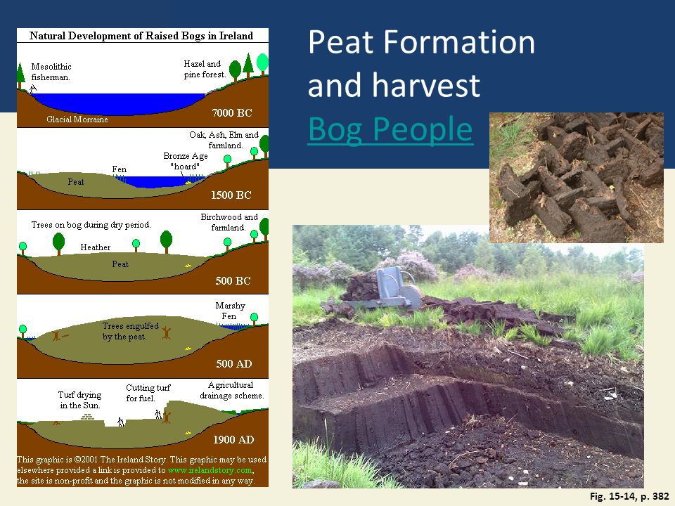 Peat Formation and harvest Bog People