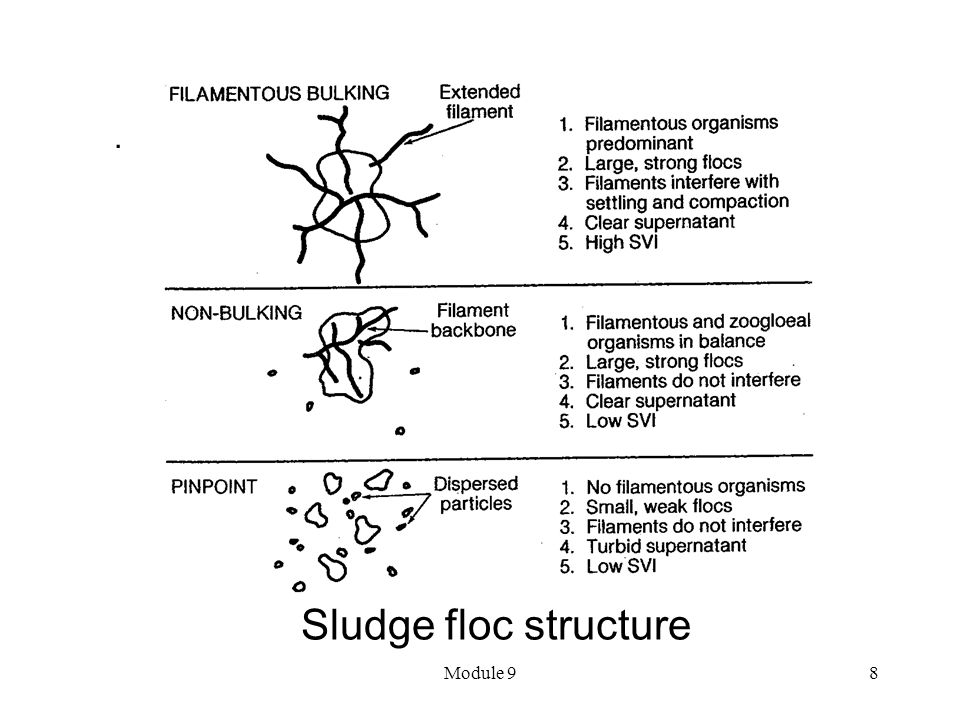 . Sludge floc structure Module 9