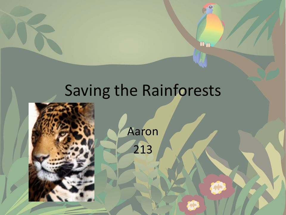 Saving the Rainforests