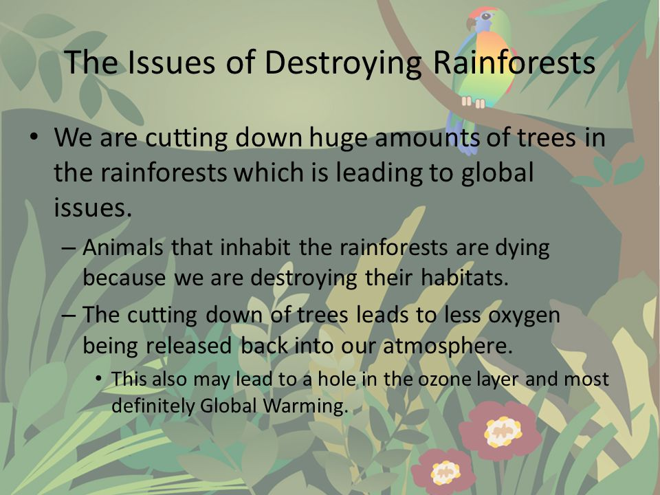 The Issues of Destroying Rainforests