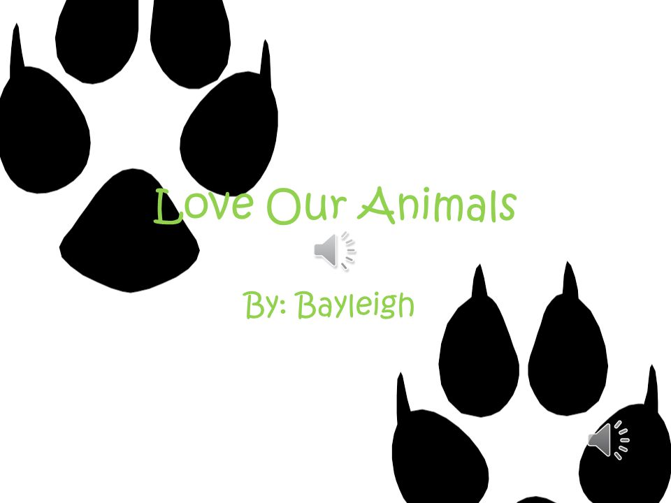 Love Our Animals By: Bayleigh