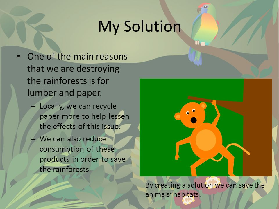 My Solution One of the main reasons that we are destroying the rainforests is for lumber and paper.