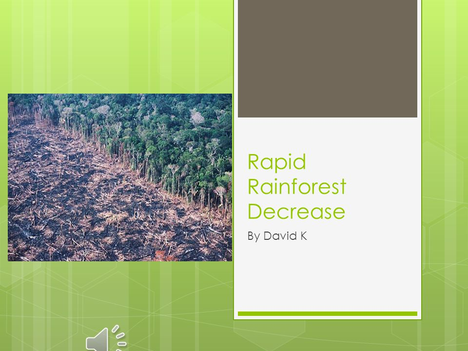 Rapid Rainforest Decrease