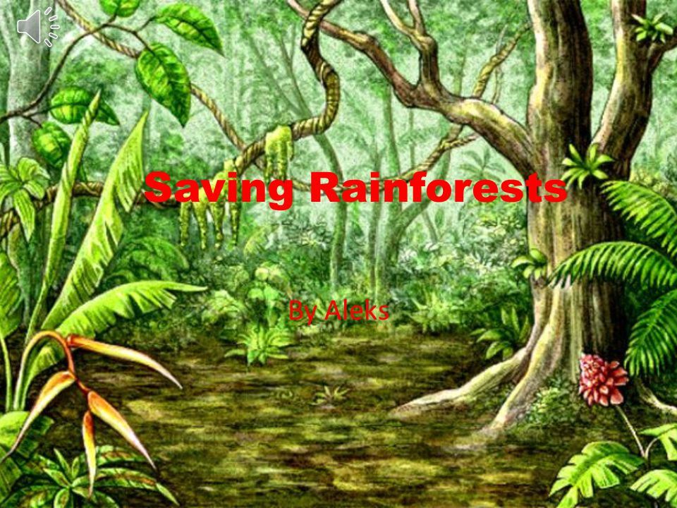Saving Rainforests By Aleks