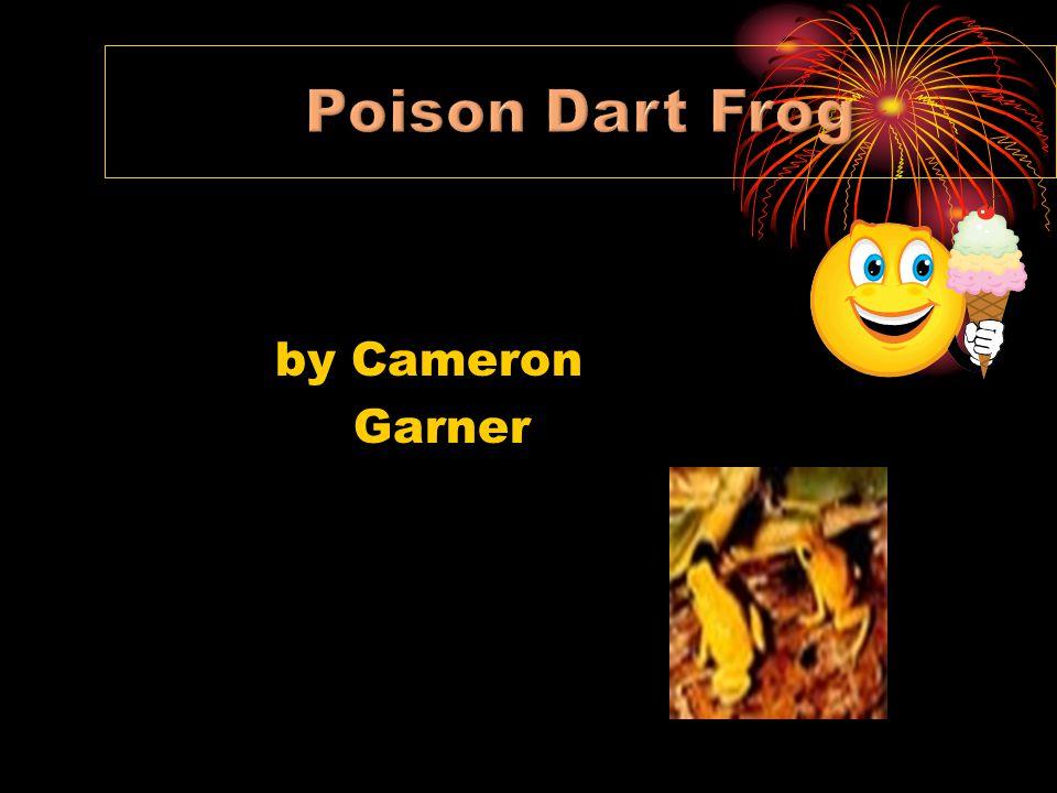 Poison Dart Frog by Cameron Garner