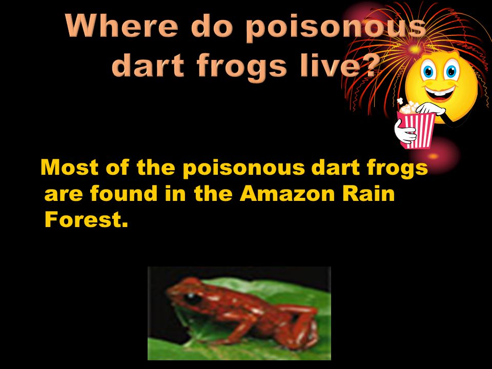 Where do poisonous dart frogs live