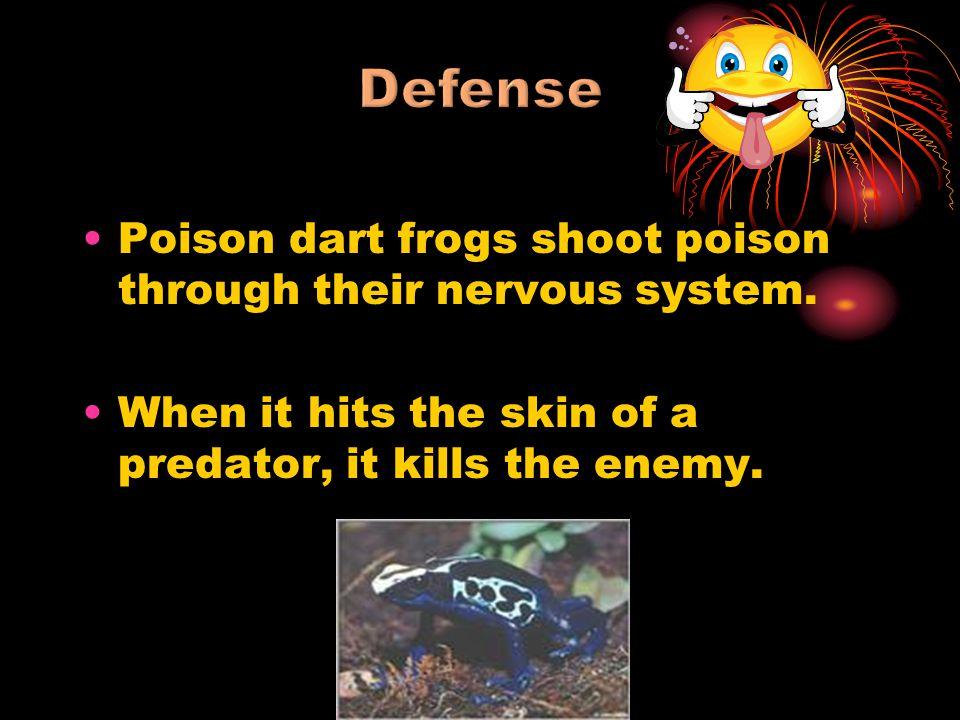 Defense Poison dart frogs shoot poison through their nervous system.