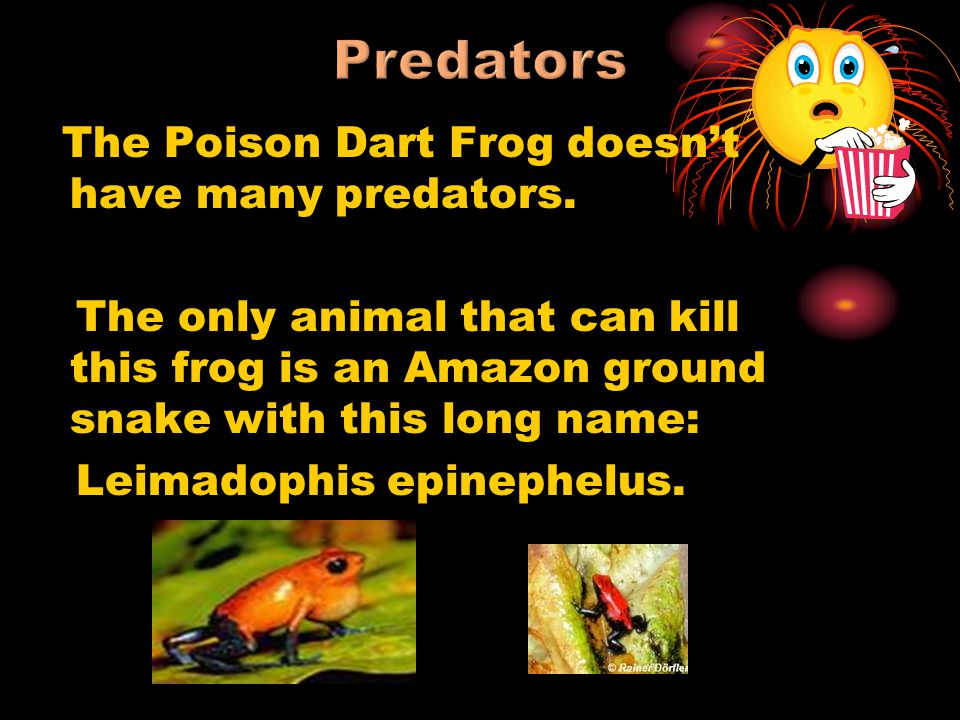 Predators The Poison Dart Frog doesn't have many predators.