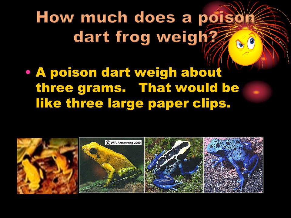 How much does a poison dart frog weigh