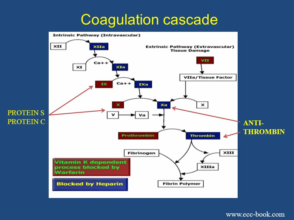 Coagulation cascade PROTEIN S PROTEIN C ANTI- THROMBIN