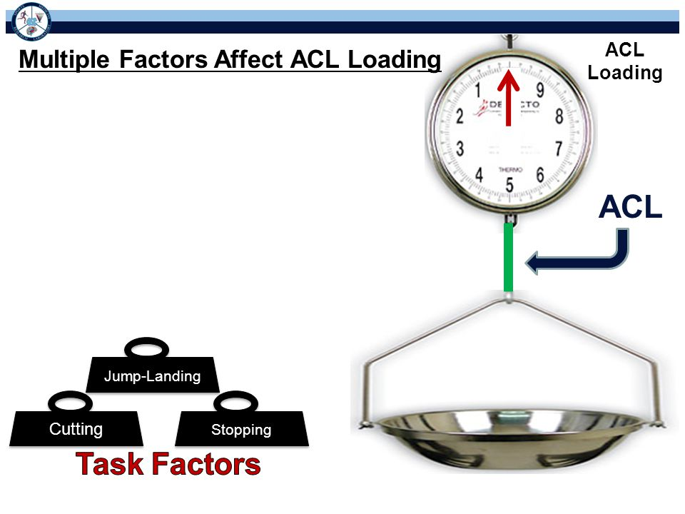 ACL Task Factors Multiple Factors Affect ACL Loading ACL Loading