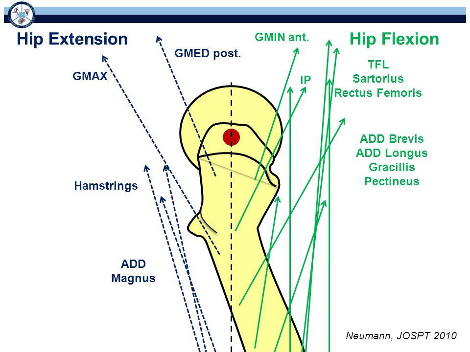 Hip Extension Hip Flexion GMIN ant. GMED post. TFL Sartorius GMAX