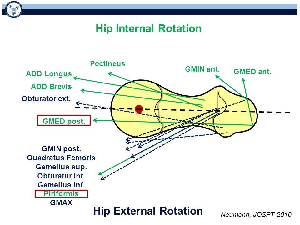 Hip Internal Rotation Hip External Rotation Pectineus GMIN ant.