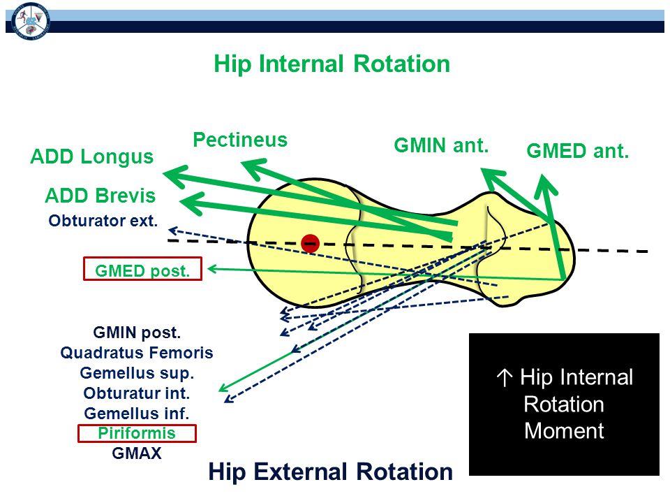 ↑ Hip Internal Rotation