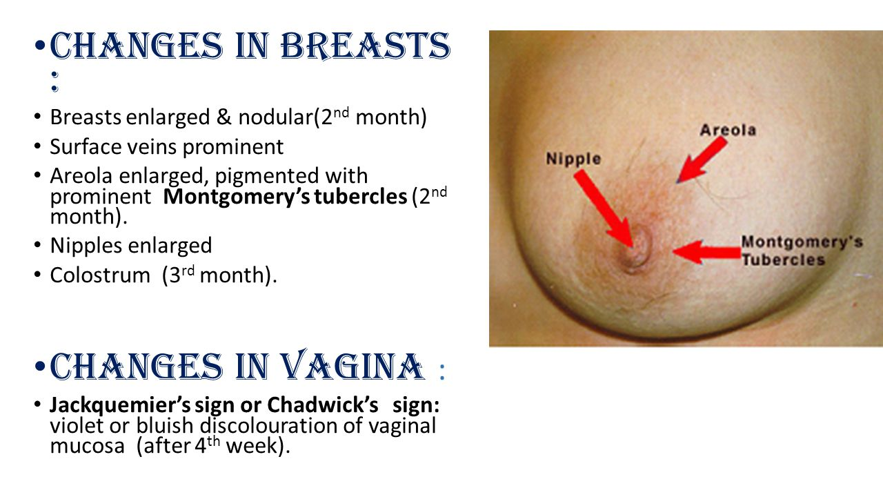 Changes in Breasts : Changes in Vagina :