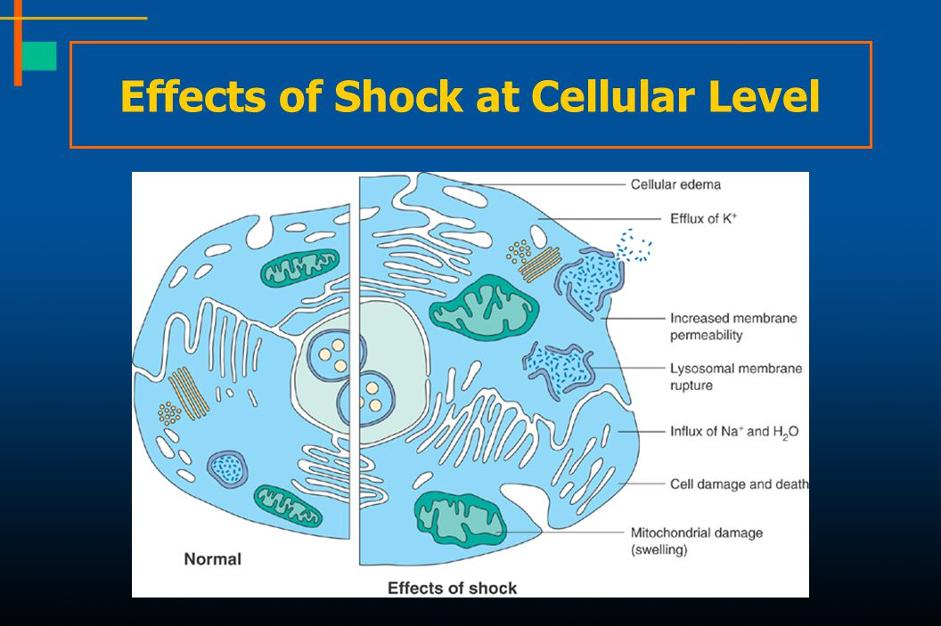Effects of Shock at Cellular Level