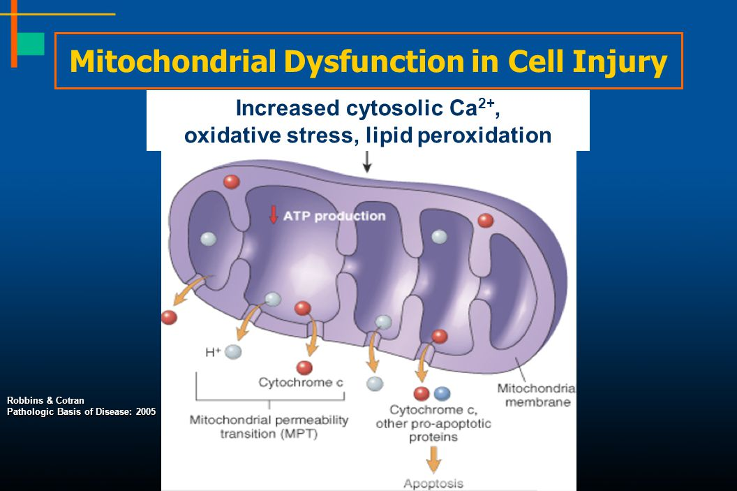 Mitochondrial Dysfunction in Cell Injury