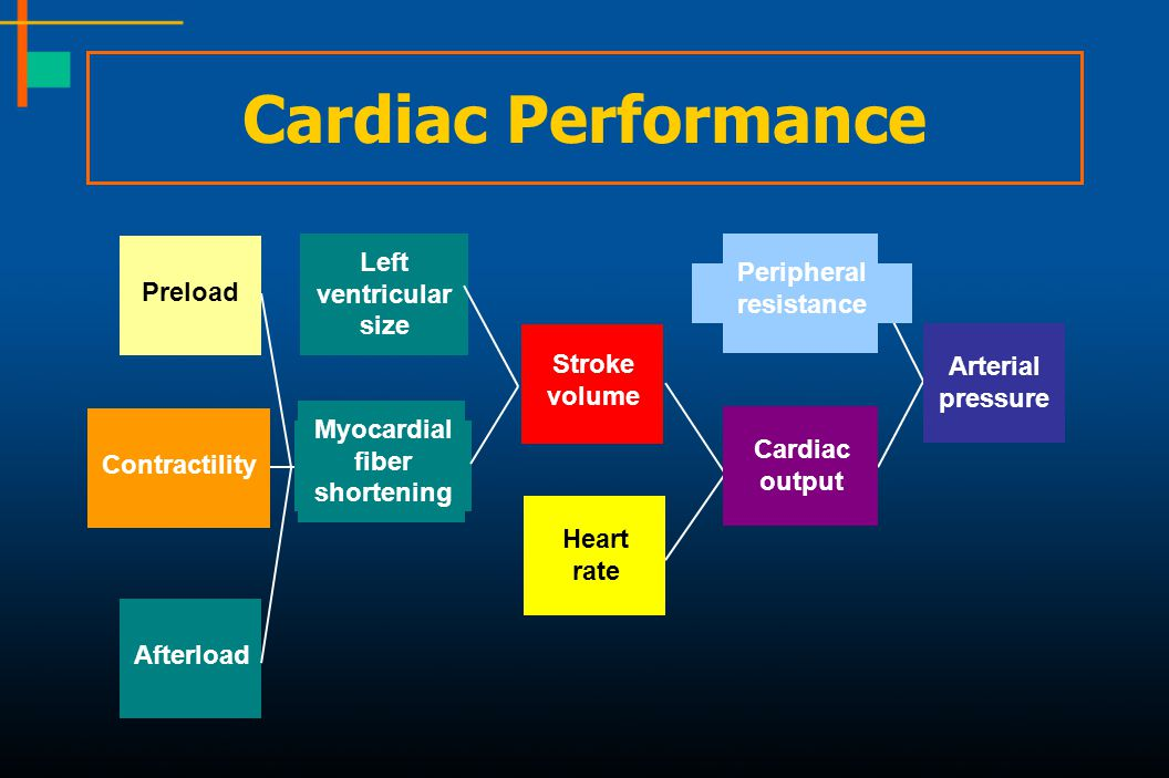 Cardiac Performance Left ventricular Peripheral Preload resistance
