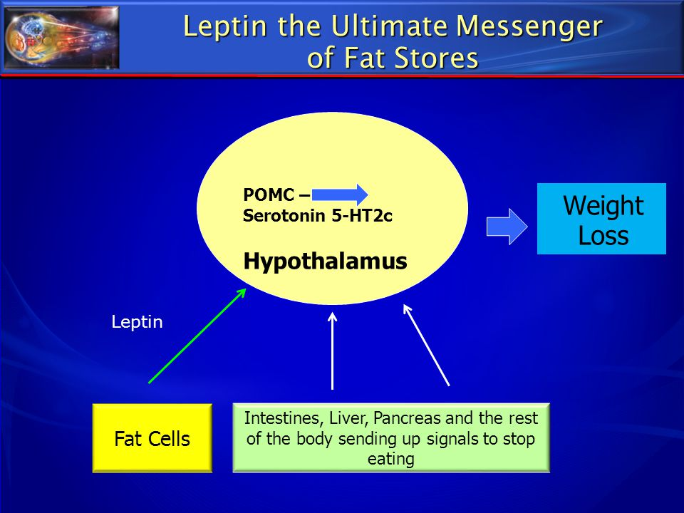 Leptin the Ultimate Messenger of Fat Stores