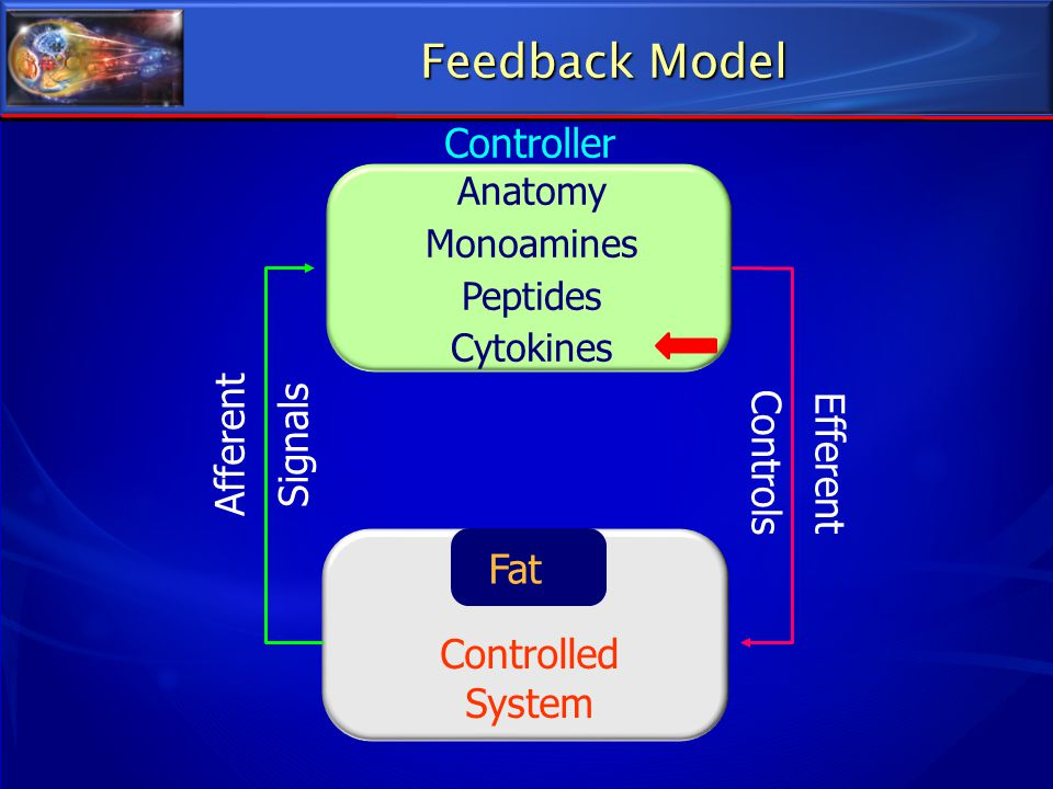 Feedback Model Controller Afferent Signals Controls Efferent Fat