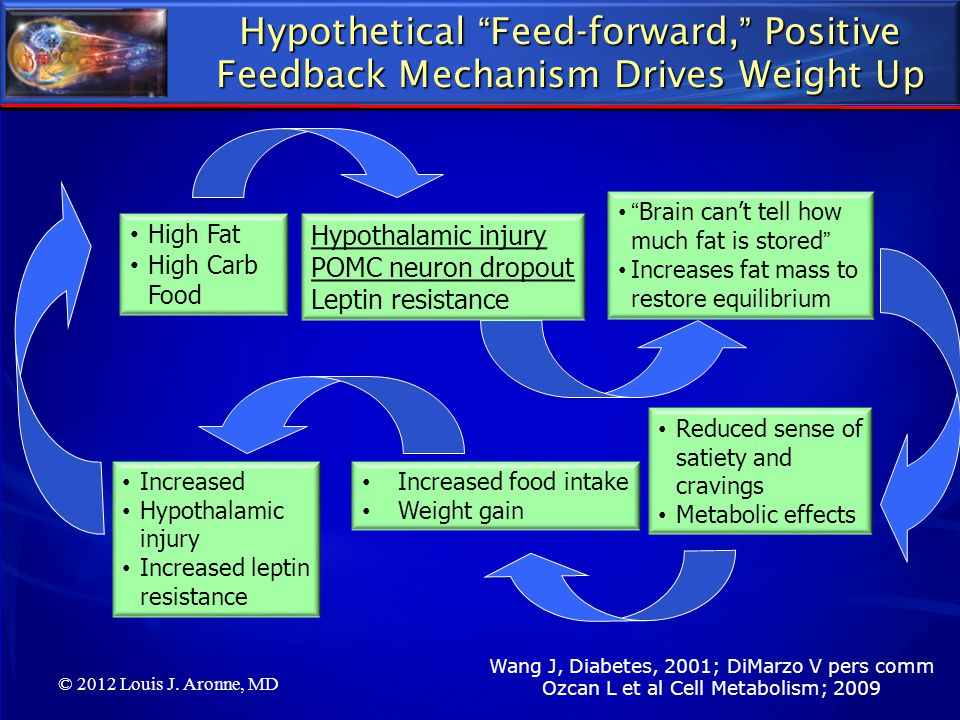Hypothetical Feed-forward, Positive Feedback Mechanism Drives Weight Up