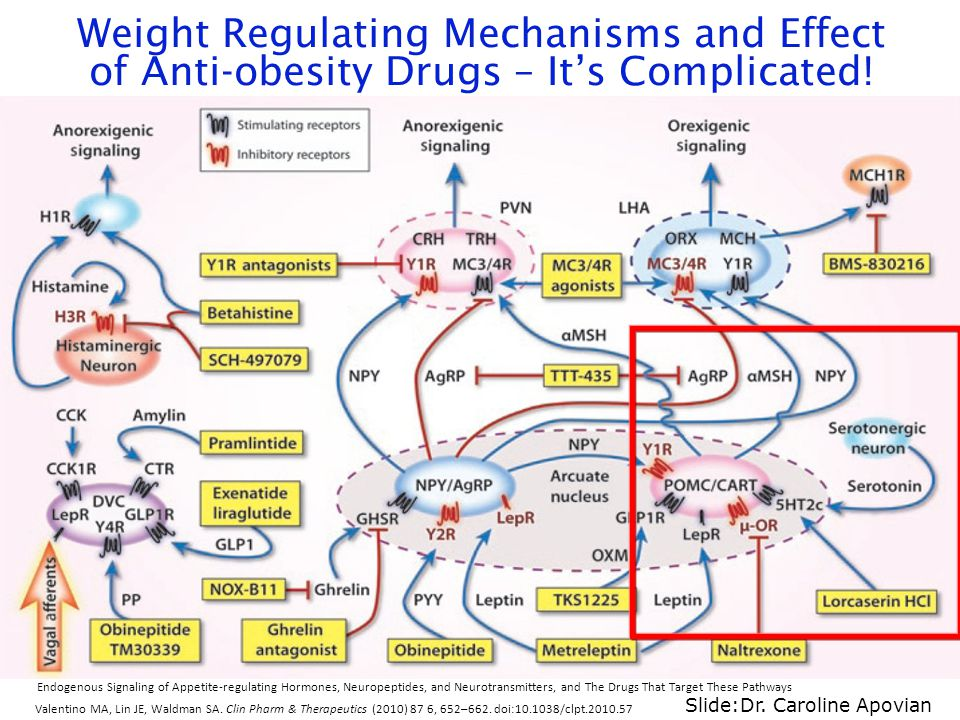 Weight Regulating Mechanisms and Effect of Anti-obesity Drugs – It's Complicated!
