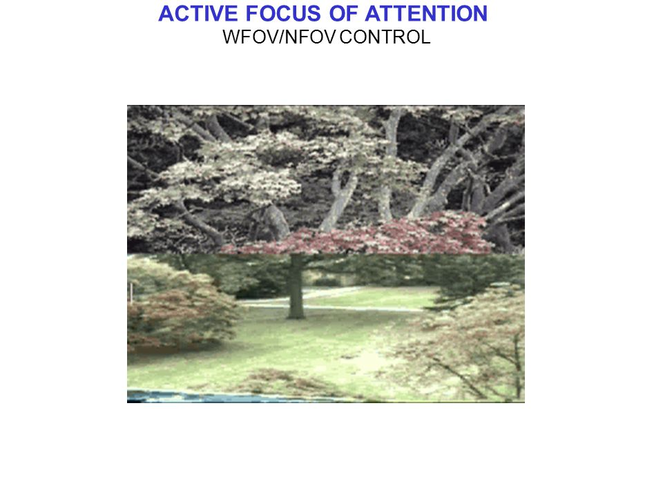 ACTIVE FOCUS OF ATTENTION