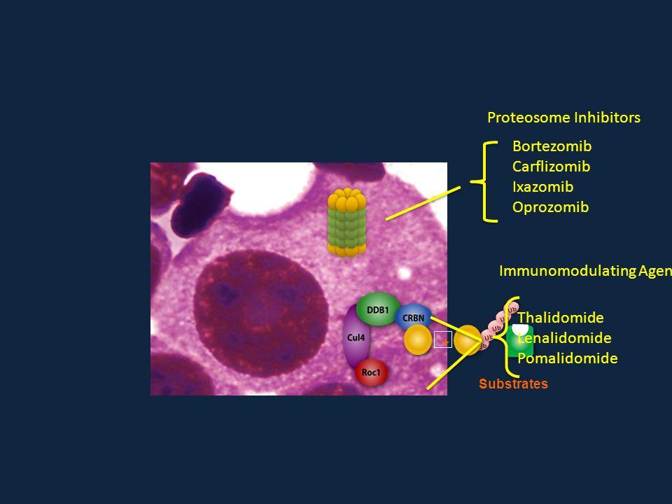 Proteosome Inhibitors