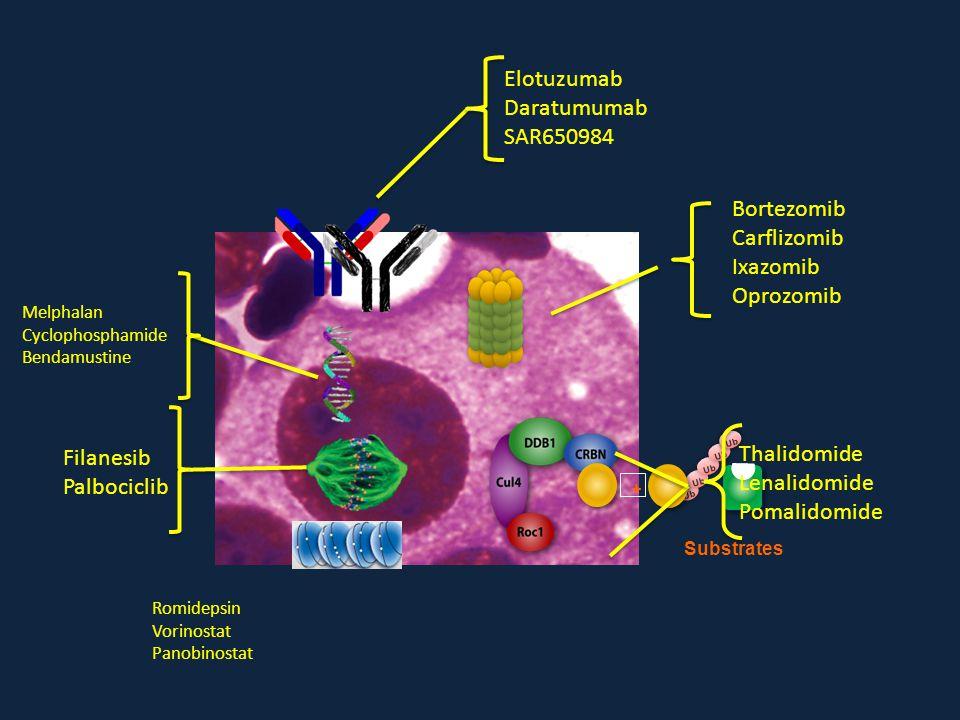 Elotuzumab Daratumumab SAR650984 Bortezomib Carflizomib Ixazomib