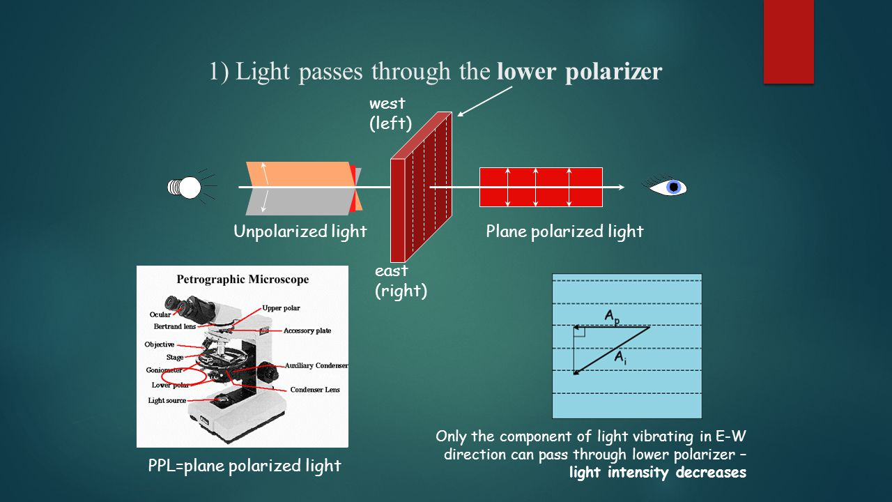 1) Light passes through the lower polarizer