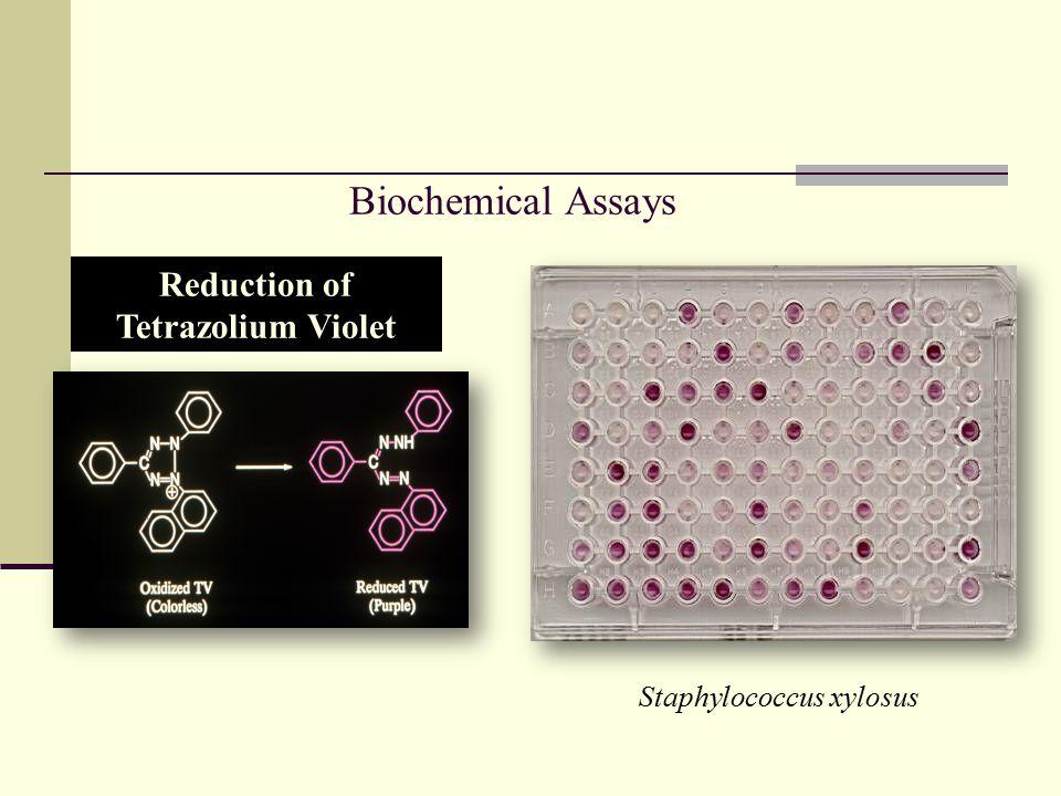 Reduction of Tetrazolium Violet