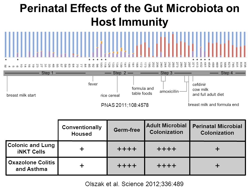 Perinatal Effects of the Gut Microbiota on Host Immunity