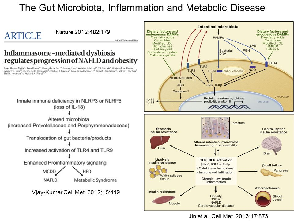 The Gut Microbiota, Inflammation and Metabolic Disease
