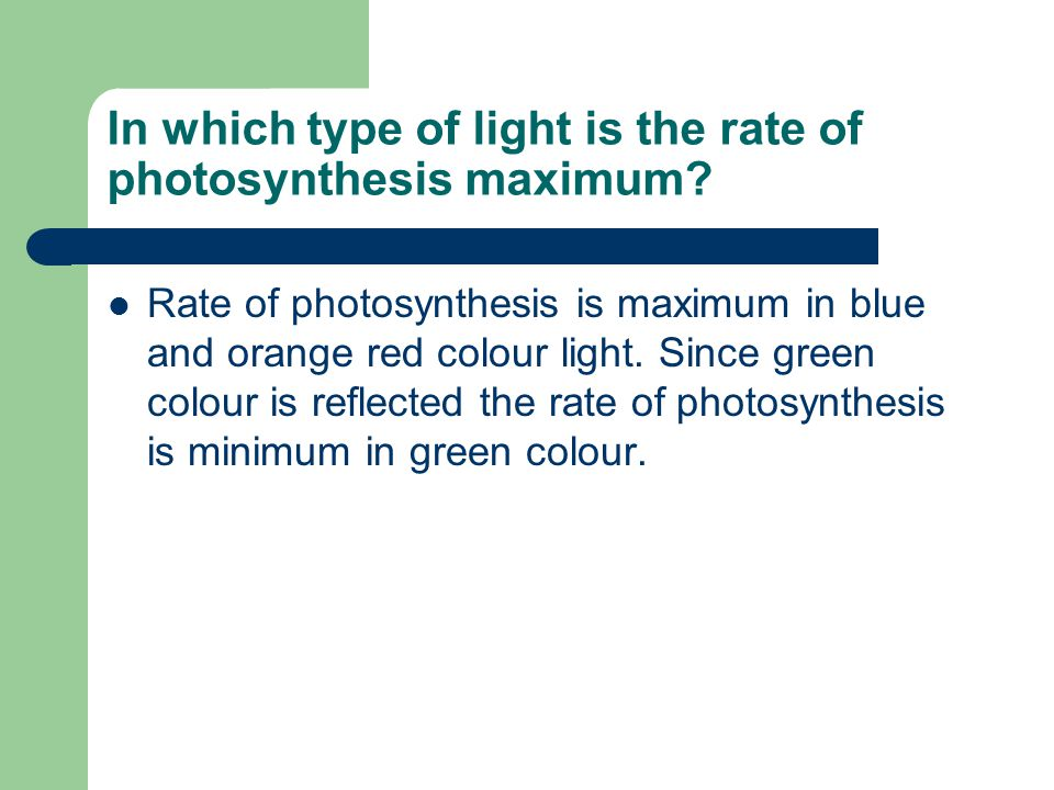 In which type of light is the rate of photosynthesis maximum