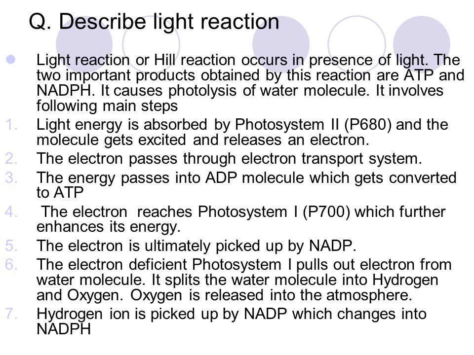 Q. Describe light reaction