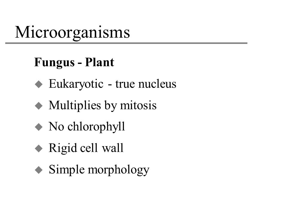 Microorganisms Fungus - Plant Eukaryotic - true nucleus