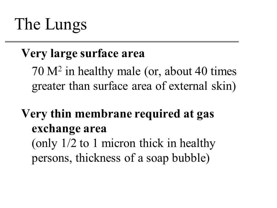 The Lungs Very large surface area