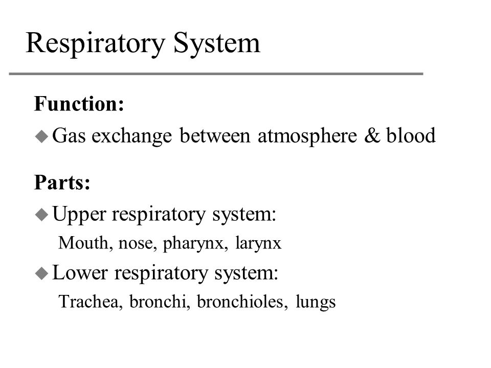 Respiratory System Function: Gas exchange between atmosphere & blood