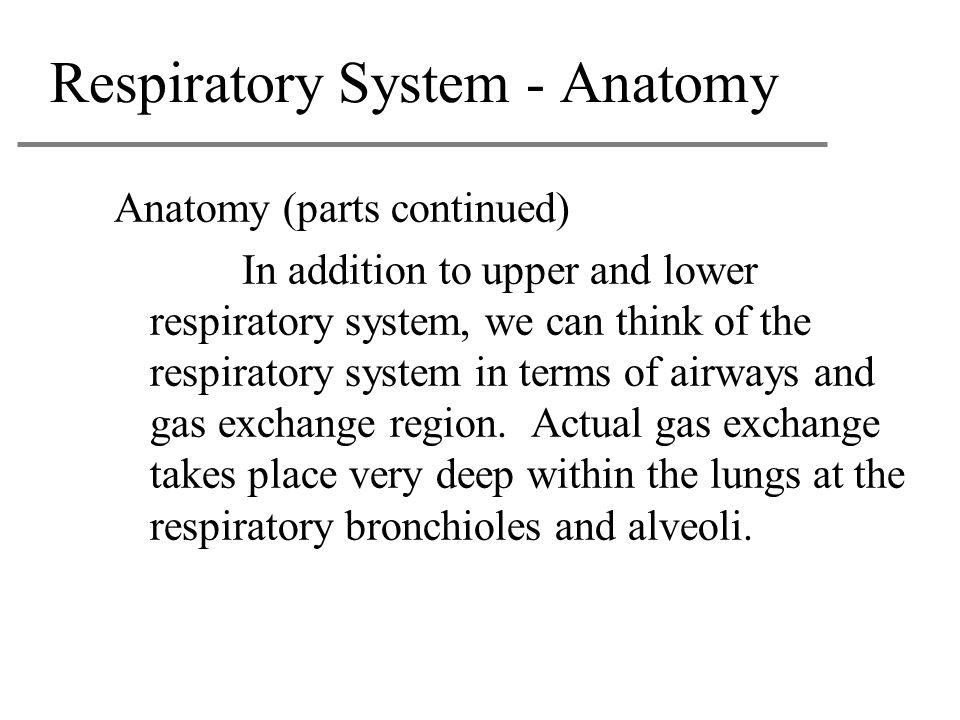 Respiratory System - Anatomy