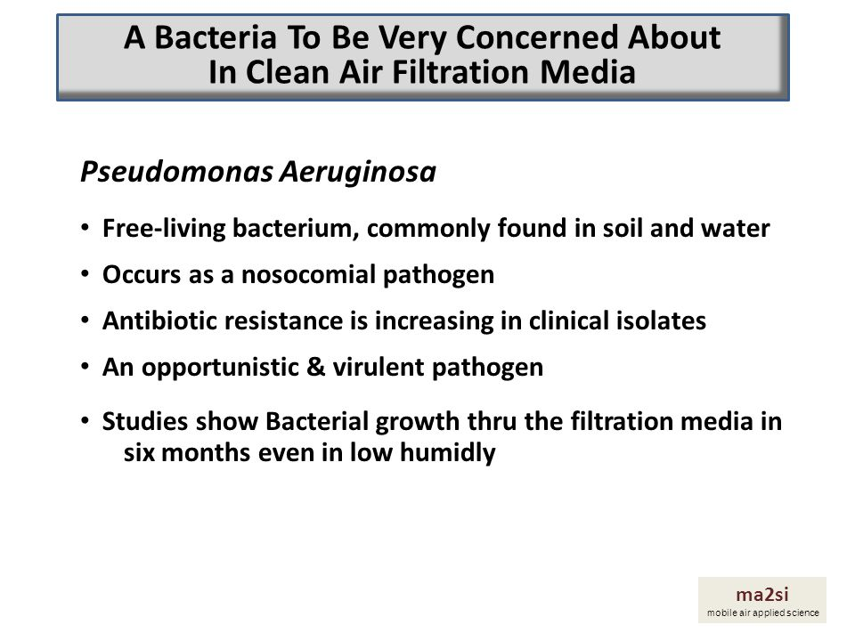 A Bacteria To Be Very Concerned About In Clean Air Filtration Media