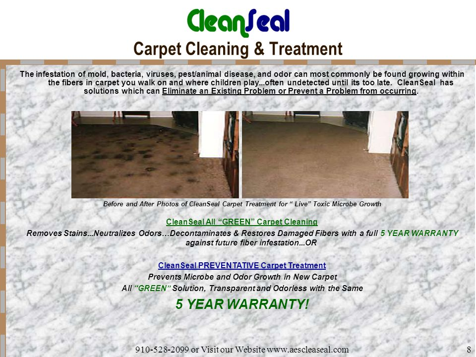 Carpet Cleaning & Treatment