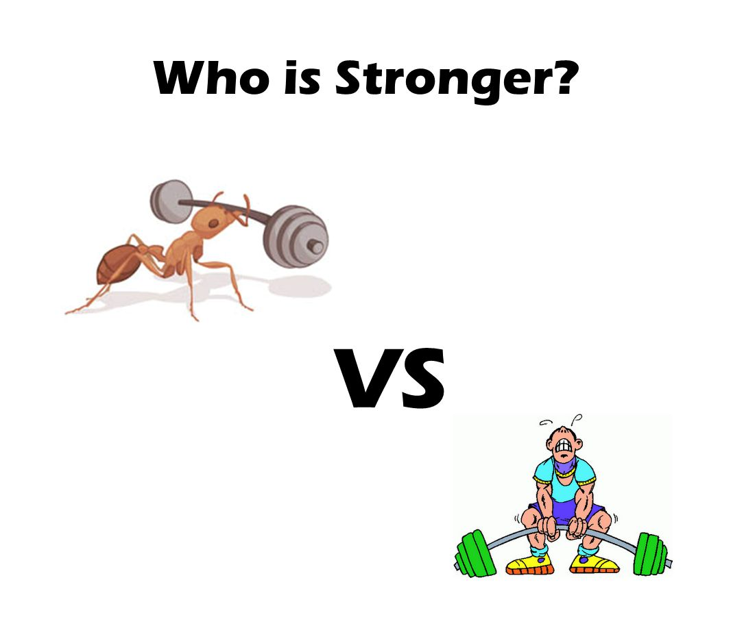 Who is Stronger VS