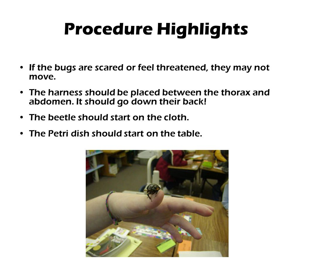 Procedure Highlights If the bugs are scared or feel threatened, they may not move.