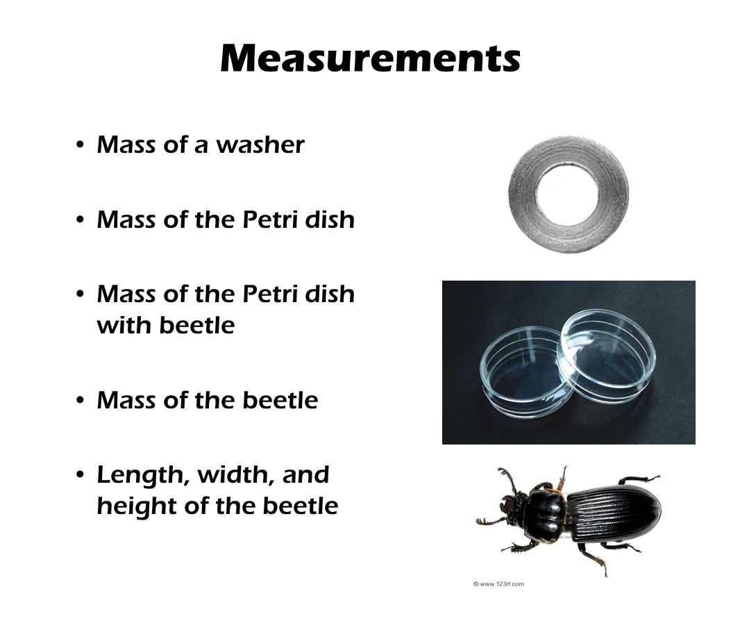 Measurements Mass of a washer Mass of the Petri dish