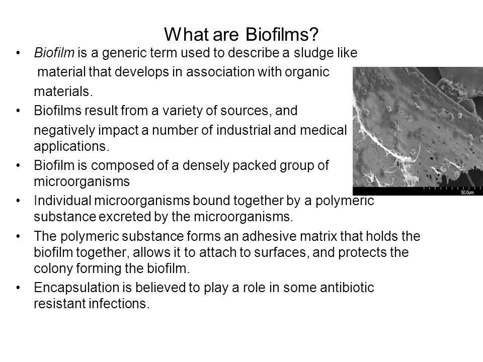 What are Biofilms Biofilm is a generic term used to describe a sludge like. material that develops in association with organic.