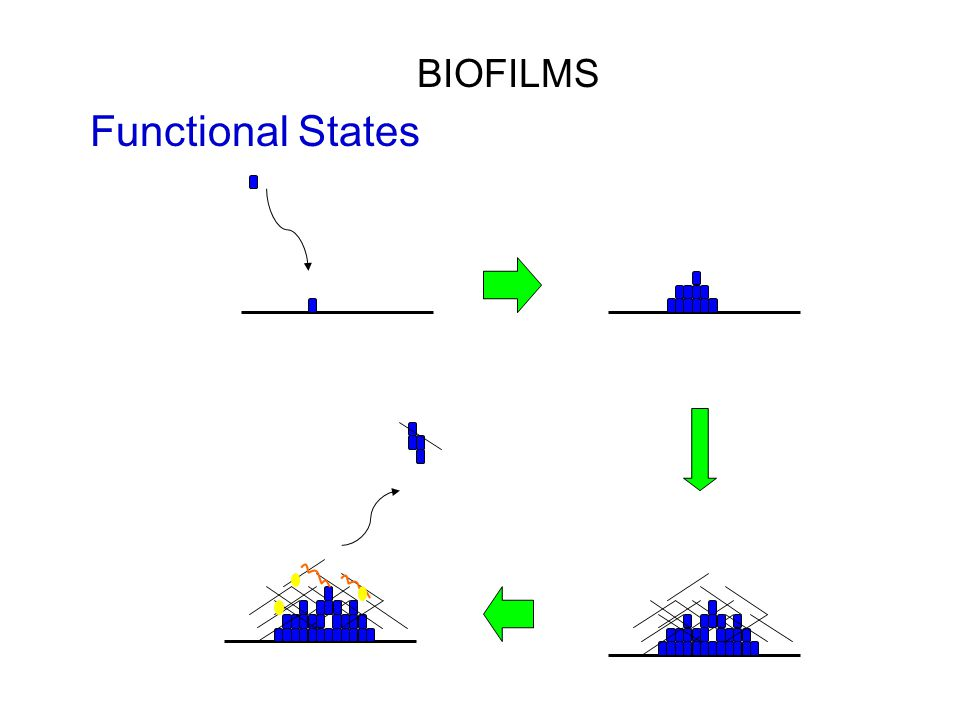 Functional States BIOFILMS