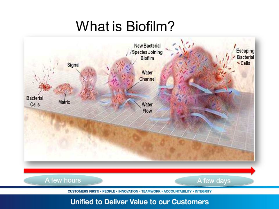 What is Biofilm What is Biofilm explanation A few hours A few days