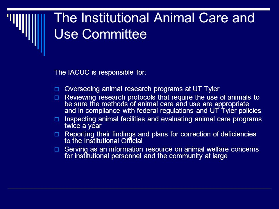 The Institutional Animal Care and Use Committee
