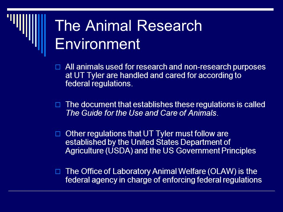 The Animal Research Environment